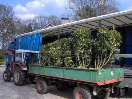 Alpenrose Hybriden Transport LKW Anhänger